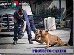 canino shcp 1