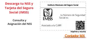 Lee más sobre el artículo Consultar y Descarga en PDF el NSS y la Tarjeta del Número de Seguridad Social del IMSS